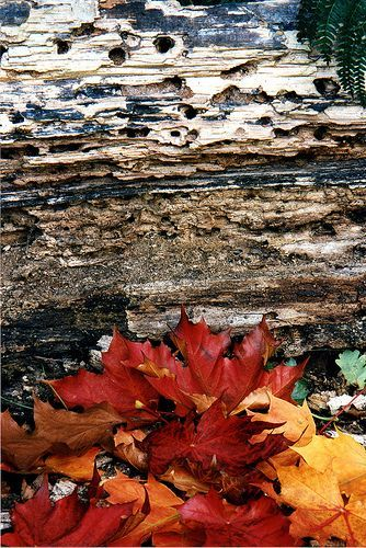 layers of autumn