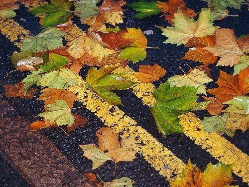 Autumn Fall Leaves  yellow lines