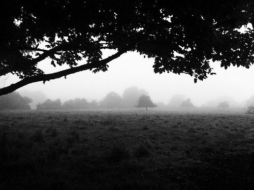 Morning Fog Emerging From Trees, por A Guy Taking Pictures