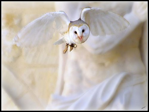 The Barn Owl, por Michael Borg Photos(I am Fuji HS20EXR)