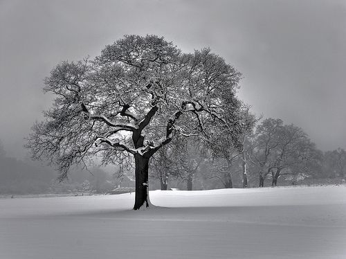 Winter in Merstham Feb 2012, por Ben124.